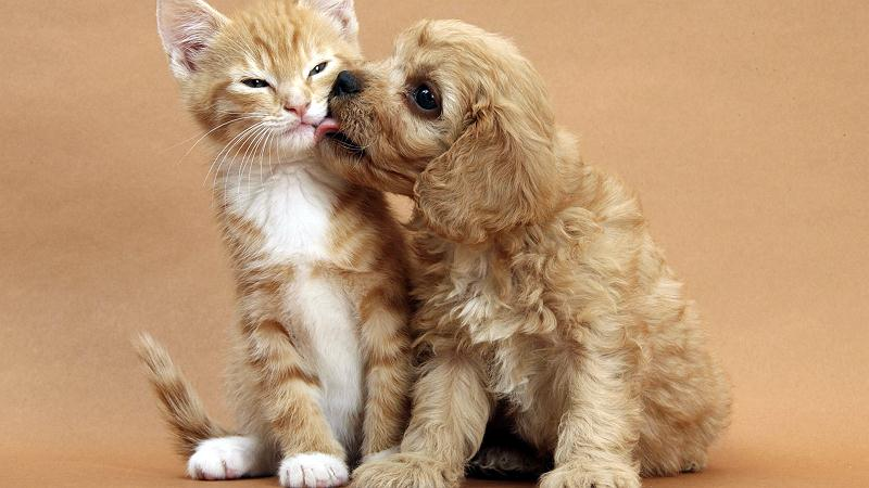 Dog kissing kitten doccu