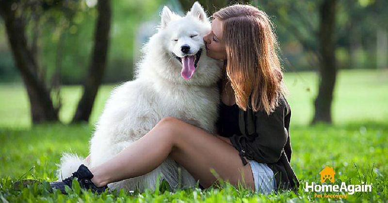 Samoyed with lady sitting docu