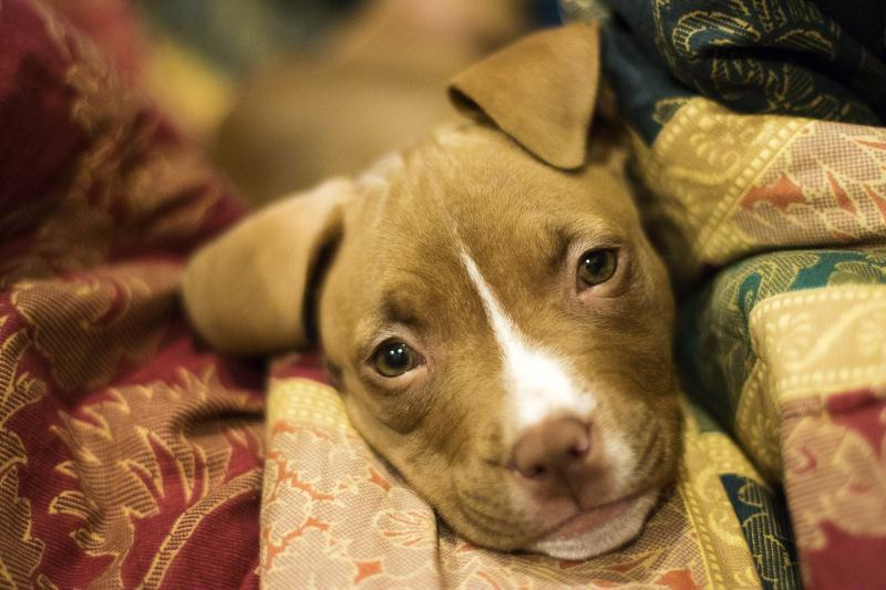 The Murdering of aPuppy