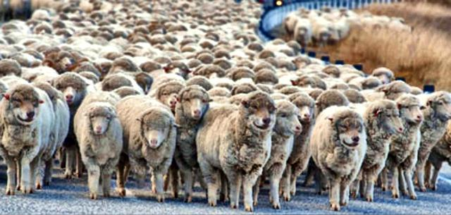 Wolves in Sheeps Clothing web