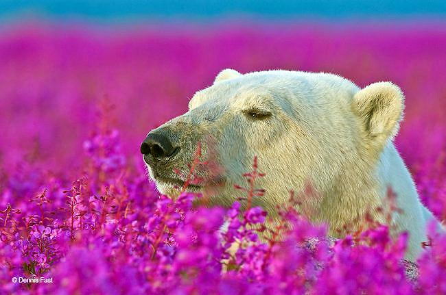 Polar bear in pink flowers bust.jpg