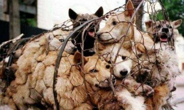 Yulin dog kill web.jpg