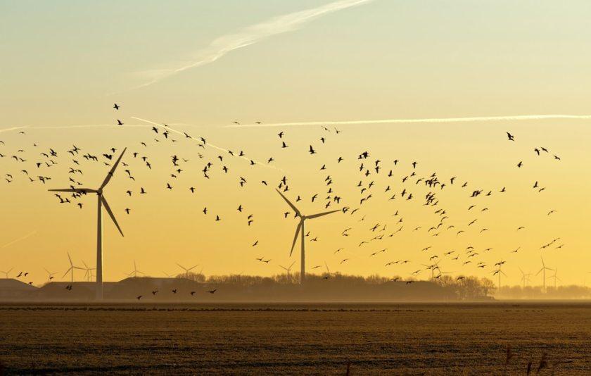Wind fans killing birds