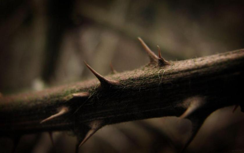 This image has an empty alt attribute; its file name is thorns.jpg