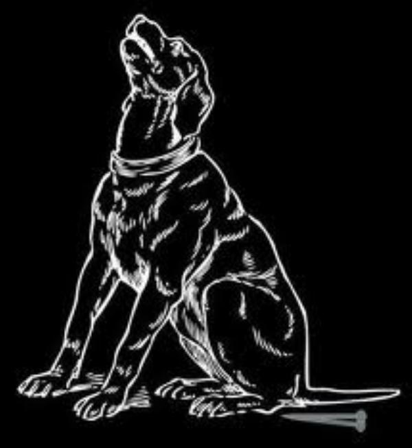 Dog Sitting on a Nail docu