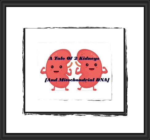 happy-kidneysframeddarker
