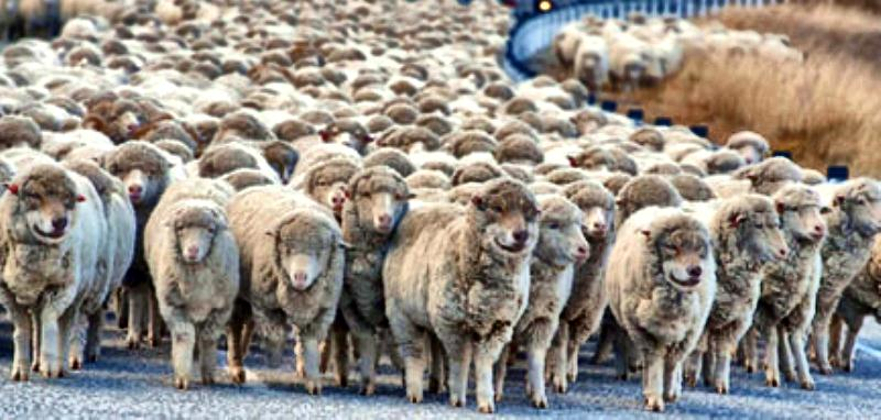 Wolves in Sheeps Clothing docu
